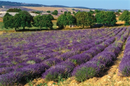 Discover Aix-en-Provence, France with MSC Cruises